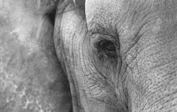 #4 Seelen. Regenwald. Elefanten.