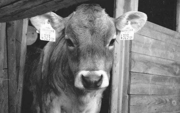 #9 #they too - warum ich vegan lebe