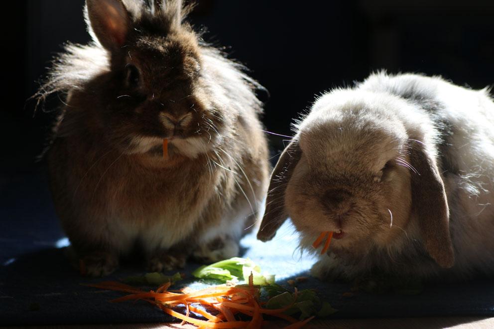 Beppi und Nils